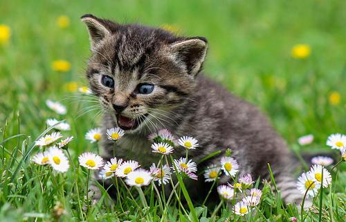 A kitten cat in a field