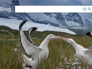 Bing web search engine: Perform image searches on your phone or computer