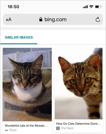 Bing image search results showing cats