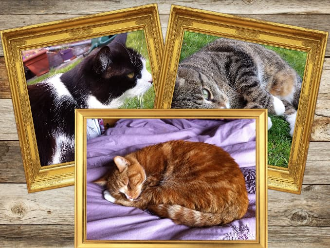 Collage of cats created with Photo Collage website