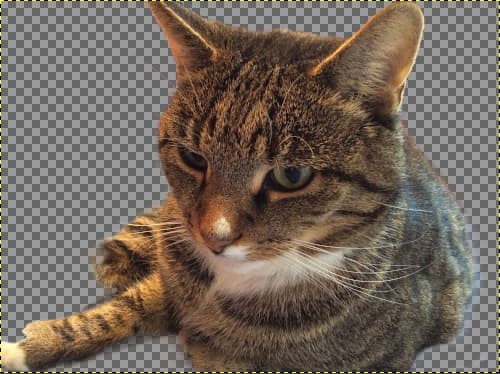 Photo cutout of a tabby cat